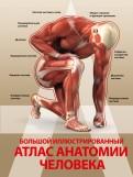 Анна Спектор: Большой иллюстрированный атлас анатомии человека