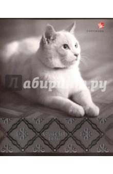"""Тетрадь в клетку """"Роскошные коты"""". В ассортименте. 48 листов, клетка (ТКФЛ485161) Эксмо-Канц"""