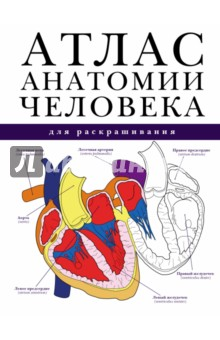 Атлас анатомии человека для раскрашиванияАнатомия и физиология<br>Книга посвящена основным элементам анатомии и физиологии человека. Издание содержит более 200 цветных рисунков различных органов и систем человеческого тела, а также более 200 схем для самостоятельного раскрашивания. лаконичный текст с использованием латинских терминов отличает научная достоверность и оригинальность изложения.<br>Раскрашивая картинки предлагаемые изображения, читатель больше узнает о различных системах и органах человеческого тела, об их взаимосвязи. Анатомия человека станет понятной, простой и увлекательной!<br>Атлас будет интересен широкому кругу читателей, полезен студентам медицинских вузов и колледжей, а также профессионалам, работающим в медицинской отрасли.<br>