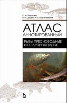 Атлас аннотированный. Рыбы пресноводные и полупроходныеПищевая промышленность<br>Атлас Рыбы пресноводные и полупроходные содержит сведения, которые не вошли в книгу Экспертиза водных биоресурсов и продуктов их переработки. Качество и безопасность (2016). В нем приведены русские и латинские названия рыб различных семейств и их важнейших представителей, имеющих наибольшее промысловое значение, идентификационные признаки каждого вида, а также возможные направления их использования. Атлас предназначен для широкого круга специалистов пищевой и рыбной промышленности, занимающихся промыслом, переработкой и реализацией рыбы и нерыбных продуктов, а также для работников рыбоохранных организаций, торговли и общественного питания. Она будет полезна для студентов высших учебных заведений и аспирантов, обучающихся по специальности Товароведение и экспертиза товаров, Технология продуктов из животного сырья и другим технологическим специальностям пищевого профиля.<br>