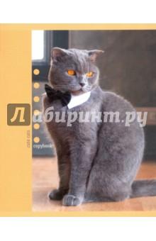 """Тетрадь """"Чудесные коты"""" (48 листов, 5 видов) (ТКЛ485352) Эксмо-Канц"""