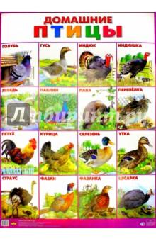 """Плакат """"Домашние птицы"""" (555х774)"""