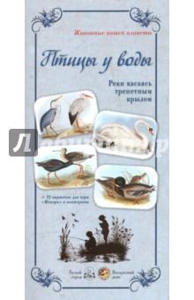 Птицы у воды. Реки касаясь трепетным крыломДемонстрационные материалы<br>Птицы, живущие рядом с водой, обладают одним общим качеством: к воде они относятся как к родной стихии. Они ныряют и плавают, учат своих деток находить еду и… выживать в трудном мире, где у птиц немало врагов, а их самих остается все меньше и меньше.<br>Содержание:<br>Белая чайка<br>Белый аист<br>Береговушка<br>Большая выпь<br>Вальдшнеп<br>Веретенник<br>Гоголь<br>Гуменник<br>Красавка<br>Краснозобая казарка<br>Кряква<br>Кулик-сорока<br>Лебедь-шипун<br>Малый баклан<br>Оляпка<br>Серая утка<br>Серая цапля<br>Средний поморник<br>Стерх<br>Тростниковая камышевка<br>Черноклювая гагара<br>Чибис<br>Чирок-свистунок<br>Щеголь<br>+ 72 карточки для игры Мемори и викторины.<br>