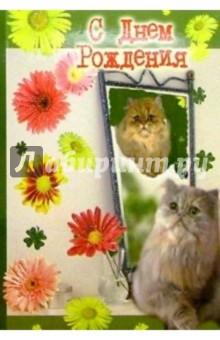 3Т-373/День рождения/открытка-вырубка двойная