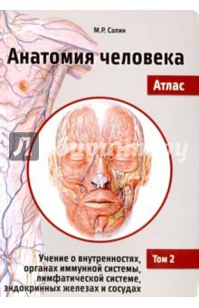 Анатомия человека. Атлас. Учебное пособие в 3-х томах. Том 2Анатомия и физиология<br>Атлас Анатомия человека состоит из трех томов. Первый том посвящен анатомии опорно-двигательного аппарата: костей скелета, соединений костей и скелетных мышц; второй - анатомии внутренних органов (пищеварительной, дыхательной, мочевыделительной и половой систем), иммунной и лимфатической систем, эндокринных органов, сердечно-сосудистой системы. Третий том охватывает анатомию центральной и периферической частей нервной системы и органов чувств.<br>Удобный карманный формат, лаконичный текст и наглядные иллюстрации делают учебное пособие незаменимым спутником при изучении анатомии человека. Материал Атласа полностью соответствует образовательной программе для высшего профессионального образования.<br>Для студентов медицинских вузов и медицинских факультетов университетов.<br>2-е издание, переработанное.<br>