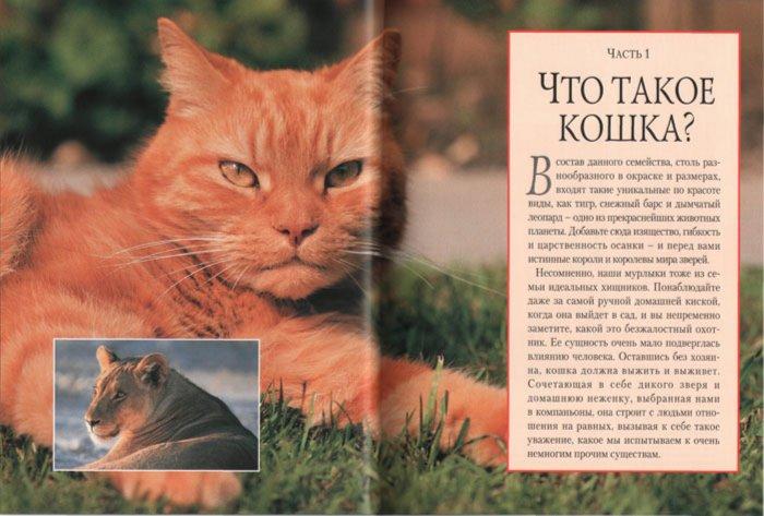 Иллюстрация 1 из 2 для Кошки: Полное руководство - Клер Бессан | Лабиринт - книги. Источник: Лабиринт
