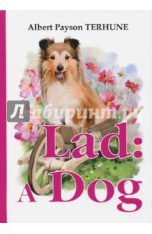 Lad. A DogХудожественная литература на англ. языке<br>Альберт Пэйсон Терхьюн - удивительный американский писатель и любитель собак. Его произведения покорили тысячи неравнодушных сердец по всему миру.<br>Лэд - это трогательная, основанная на реальных событиях, история о собаке породы коли. Читателя ждут необыкновенные приключения, яркие персонажи и интересные истории о преданности, любви и настоящей дружбе.<br>Читайте зарубежную литературу в оригинале!<br>