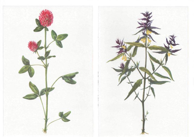 Иллюстрация 1 из 5 для Цветы луговые, лесные, полевые. Демонстрационный материал для фронтальных занятий | Лабиринт - книги. Источник: Лабиринт