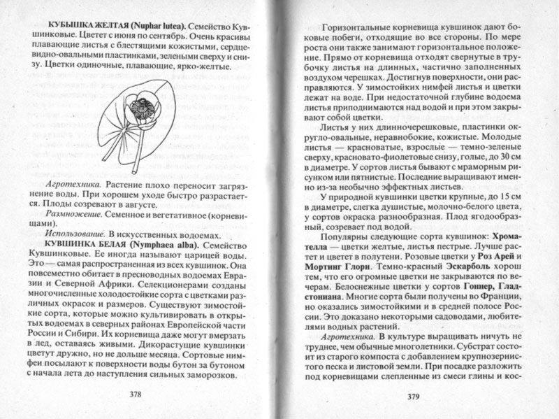 Иллюстрация 1 из 48 для Современный сад - Майя Александрова | Лабиринт - книги. Источник: Лабиринт