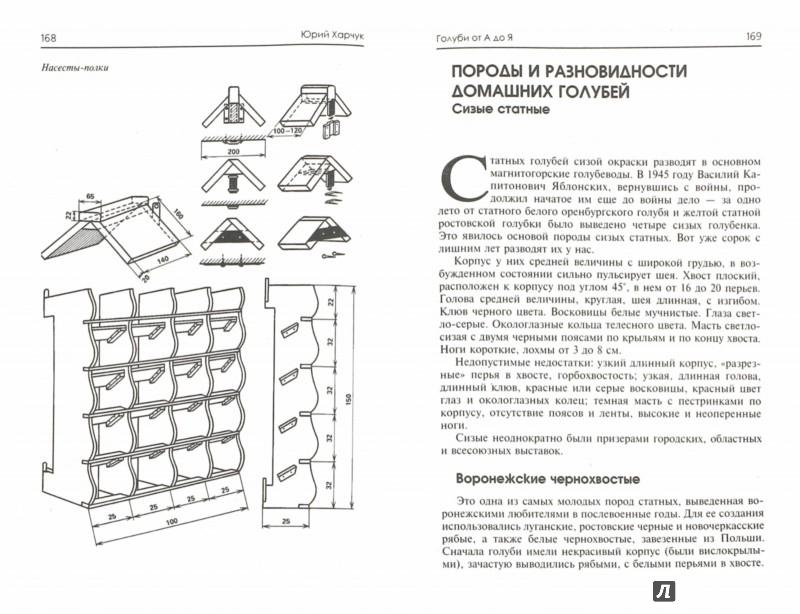 Иллюстрация 1 из 21 для Голуби от А до Я - Юрий Харчук | Лабиринт - книги. Источник: Лабиринт