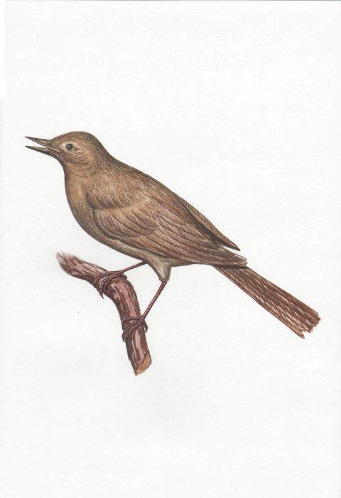 Птицы демонстрационный материал для