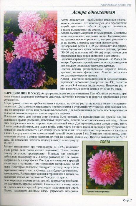 Иллюстрация 1 из 11 для Все о любимых цветах - Ганичкина, Ганичкин | Лабиринт - книги. Источник: Лабиринт