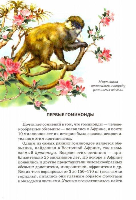 Иллюстрация 1 из 53 для Происхождение человека - Ирина Рябинина | Лабиринт - книги. Источник: Лабиринт