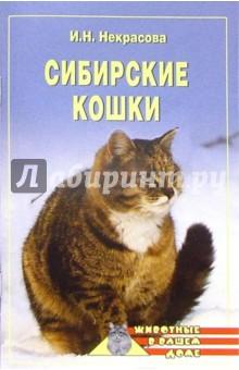 Некрасова Ирина Николаевна Сибирские кошки