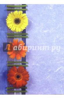 Тетрадь 96 листов (клетка) (твердый переплет) /4667