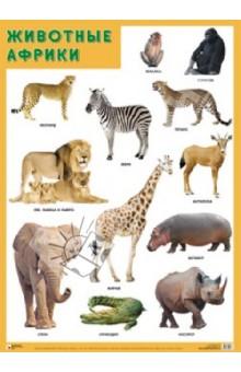 """Плакат """"Животные Африки"""" обложка книги"""