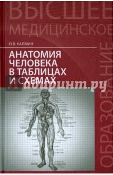 Анатомия человека в таблицах и схемах. Учебное пособие - Олег Калмин