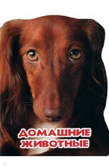 Купить Домашние животные ISBN: 978-5-378-25458-3