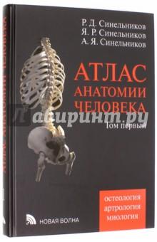 Атлас анатомии человека. Синельников. 2 том | festima. Ru.