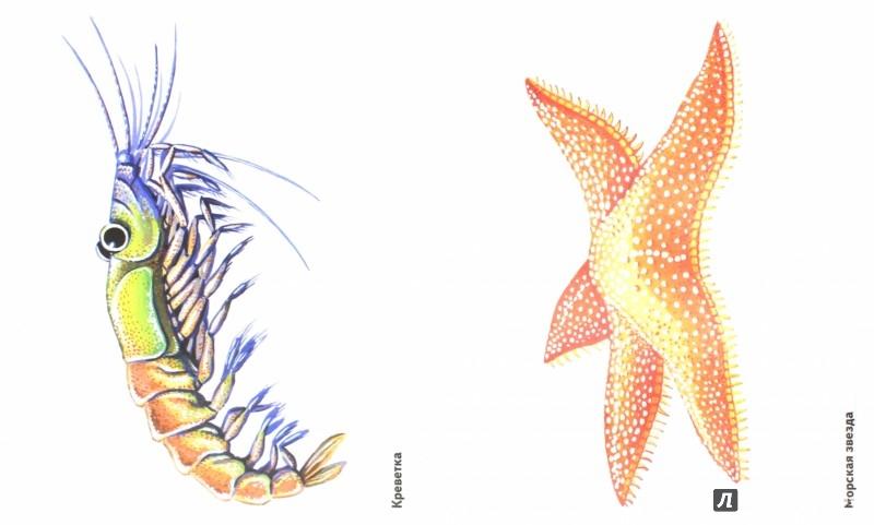 Иллюстрация 1 из 20 для Обитатели океана в картинках. Наглядное пособие для педагогов, логопедов, воспитателей и родителей   Лабиринт - книги. Источник: Лабиринт
