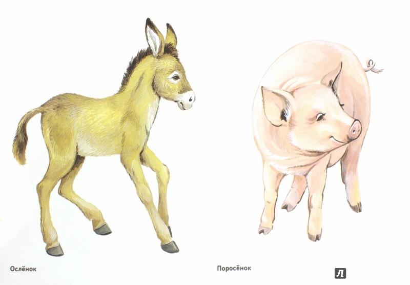 Иллюстрация 1 из 29 для Детеныши домашних животных в картинках. Наглядное пособие для педагогов, воспитателей и родителей   Лабиринт - книги. Источник: Лабиринт