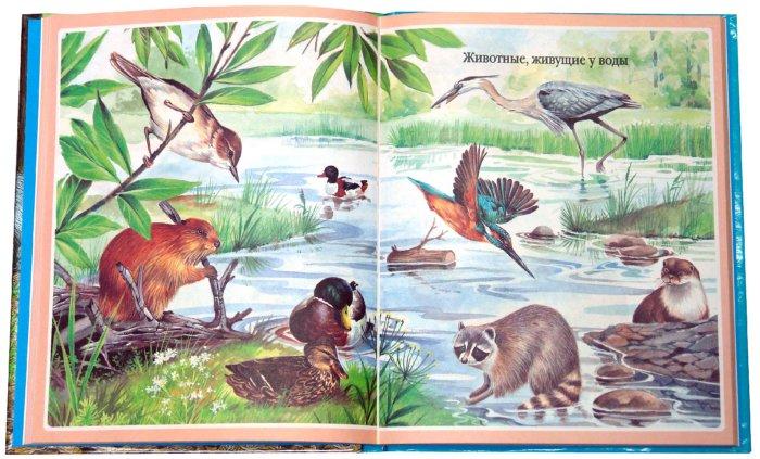 Иллюстрация 1 из 37 для Животные - Мари-Рене Пимон | Лабиринт - книги. Источник: Лабиринт