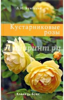 Кустарниковые розы саженцы ч рной смородины