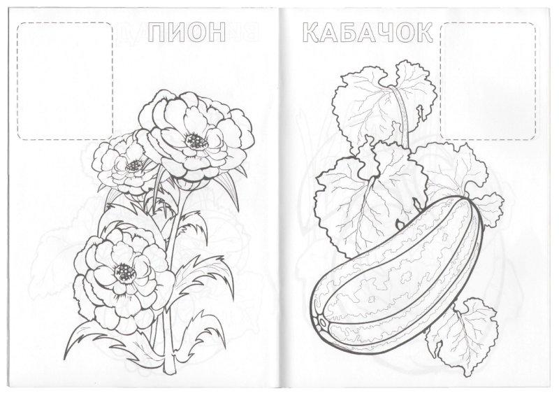 Иллюстрация 1 из 4 для Растения | Лабиринт - книги. Источник: Лабиринт