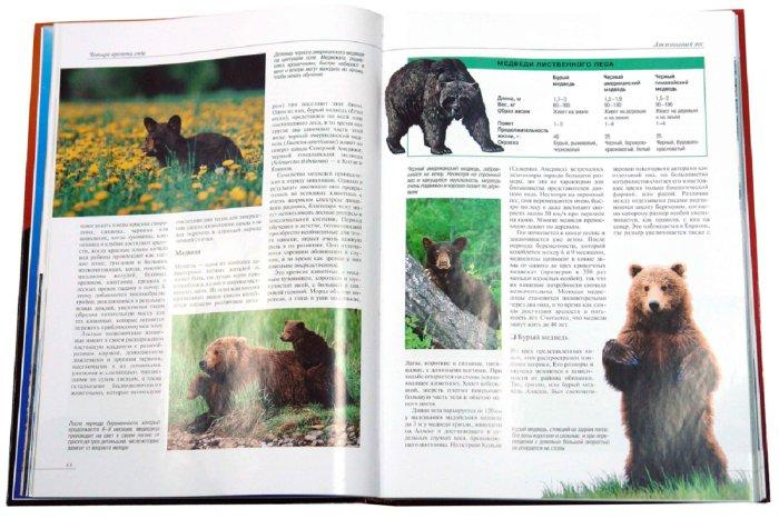 Иллюстрация 1 из 20 для Большой атлас животных | Лабиринт - книги. Источник: Лабиринт