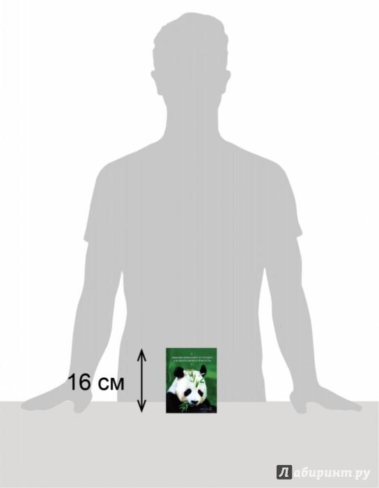 Иллюстрация 1 из 10 для Любовь приходит и уходит, а кушать хочется всегда - Сан Хо | Лабиринт - книги. Источник: Лабиринт