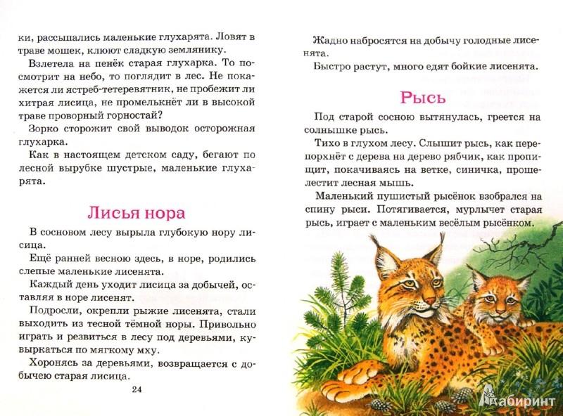 Иллюстрация 1 из 13 для Рассказы о природе - Иван Соколов-Микитов | Лабиринт - книги. Источник: Лабиринт