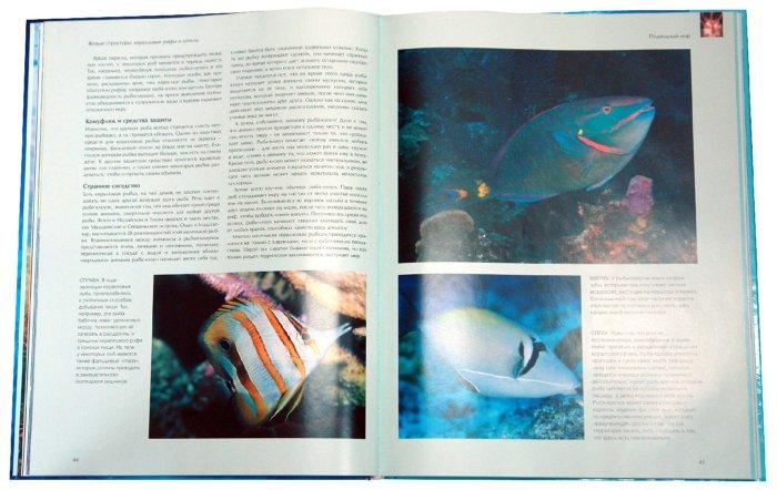 Иллюстрация 1 из 4 для Путешествие в подводный мир. Океан и его обитатели - Пол Хорсман | Лабиринт - книги. Источник: Лабиринт
