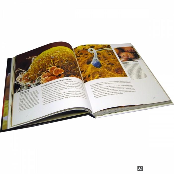 Иллюстрация 1 из 14 для Ребенок родился! Чудо зарождения новой жизни - Нильсон, Хамбергер | Лабиринт - книги. Источник: Лабиринт