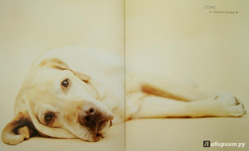 Иллюстрация 1 из 18 для 101 фотогерой. С любовью к собакам - Рейчел Хэйл | Лабиринт - книги. Источник: Лабиринт