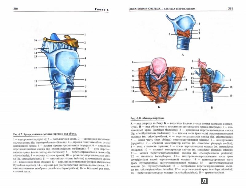 Иллюстрация 1 из 15 для Атлас анатомии человека. Учебное пособие для студентов высших медицинских учебных заведений - Рудольф Самусев | Лабиринт - книги. Источник: Лабиринт