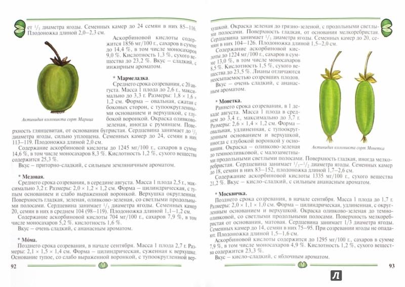 Иллюстрация 1 из 19 для Актинидия, лимонник. Пособие для садоводов-любителей - Элла Колбасина | Лабиринт - книги. Источник: Лабиринт