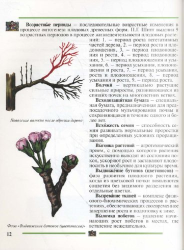 Иллюстрация 1 из 16 для Секреты садоводства: Пособие для садоводов-любителей - Чухляев, Деменко | Лабиринт - книги. Источник: Лабиринт