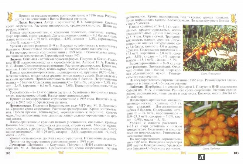 Иллюстрация 1 из 23 для Облепиха. Пособие для садоводов-любителей - Людмила Скалий | Лабиринт - книги. Источник: Лабиринт