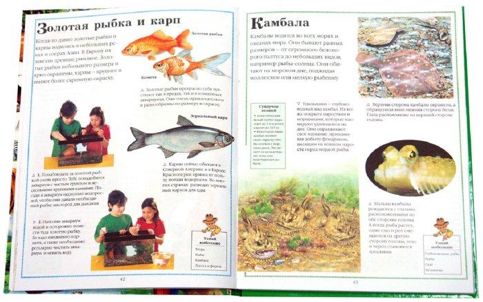 Иллюстрация 1 из 13 для Все о животных - Фарндон, Кирквуд | Лабиринт - книги. Источник: Лабиринт