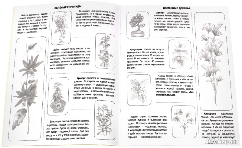 Иллюстрация 1 из 10 для Комнатные растения. Книжка с наклейками | Лабиринт - книги. Источник: Лабиринт