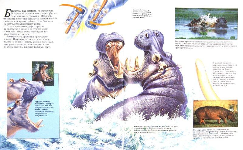 Иллюстрация 1 из 13 для Бегемоты - Бет Брюст   Лабиринт - книги. Источник: Лабиринт