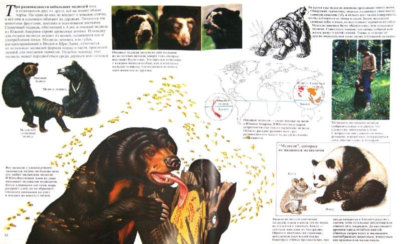 Иллюстрация 1 из 9 для Медведи - Джон Веско | Лабиринт - книги. Источник: Лабиринт
