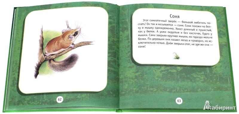 Иллюстрация 1 из 11 для Под пологом леса. Моя первая книга о животных | Лабиринт - книги. Источник: Лабиринт