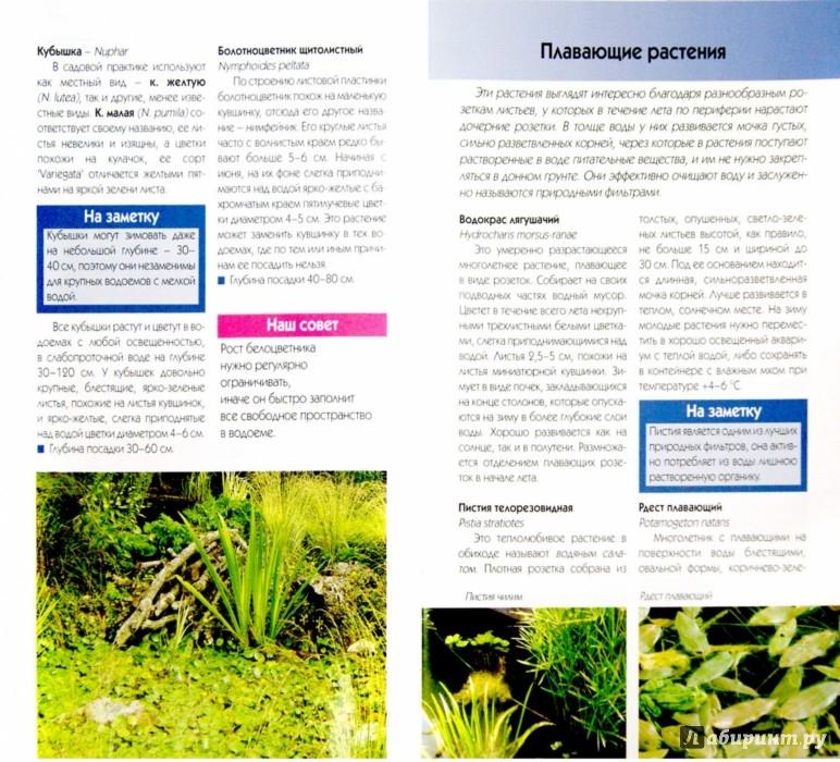 Иллюстрация 1 из 22 для Выбираем растения для декоративного водоема - Валерия Ильина | Лабиринт - книги. Источник: Лабиринт