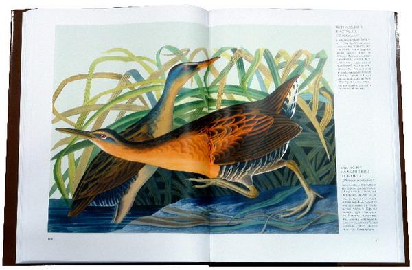 Иллюстрация 1 из 33 для Птицы Америки (в футляре) - Джеймс Одюбон | Лабиринт - книги. Источник: Лабиринт