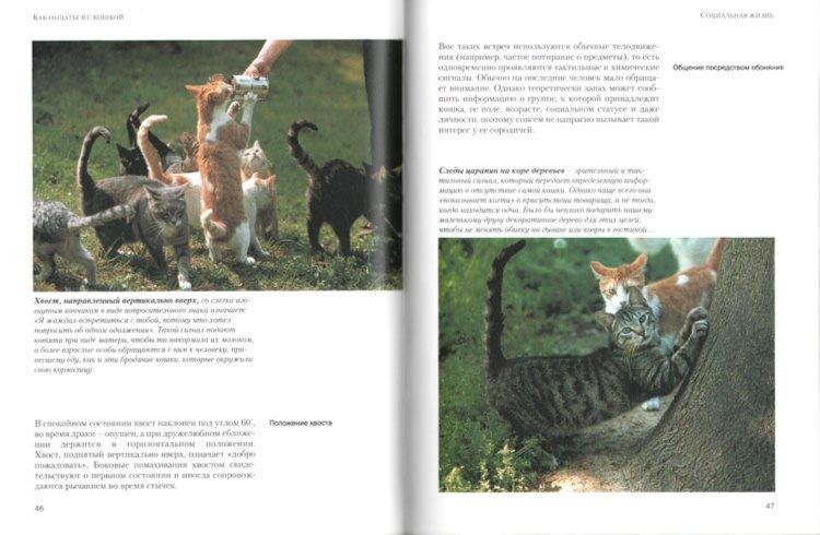 Иллюстрация 1 из 12 для Как общаться с кошкой - Капра, Роботти, Мессери | Лабиринт - книги. Источник: Лабиринт