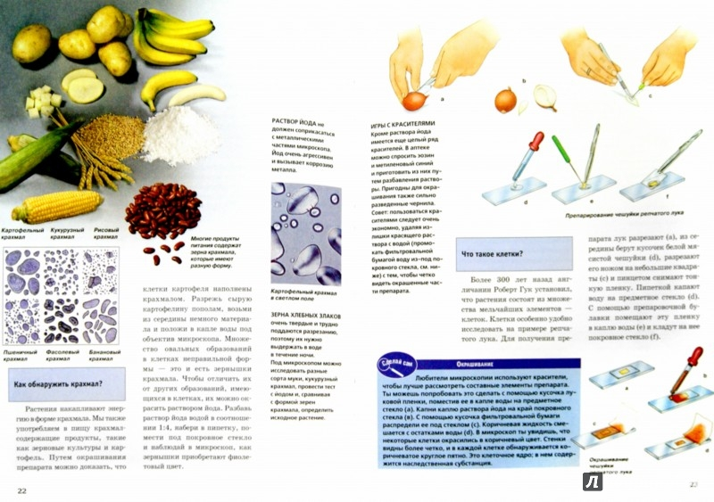 Иллюстрация 1 из 9 для Микроскоп - Райнер Кёте   Лабиринт - книги. Источник: Лабиринт