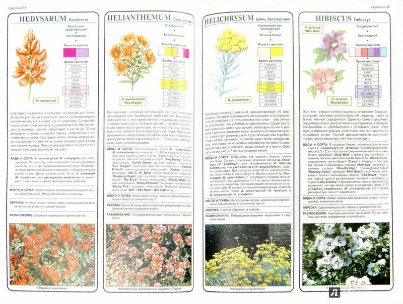 Иллюстрация 1 из 19 для Все о декоративноцветущих кустарниках - Дэвид Хессайон | Лабиринт - книги. Источник: Лабиринт