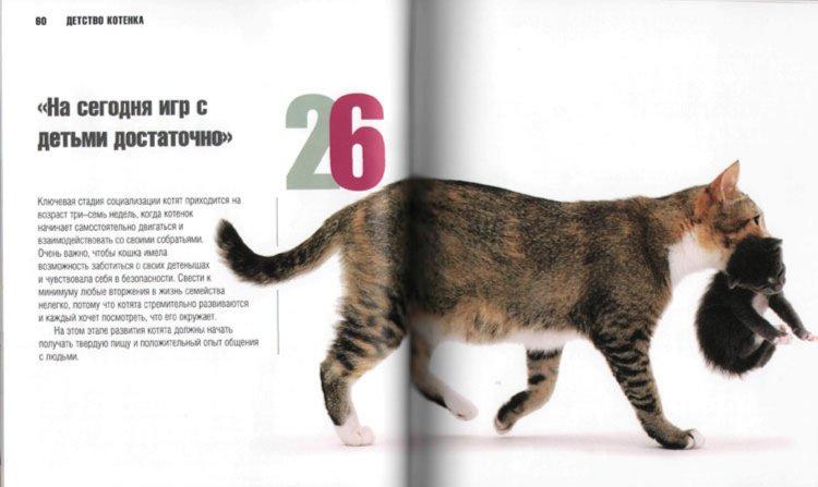 Иллюстрация 1 из 12 для Кошка: язык телодвижений - Тревор Уорнер | Лабиринт - книги. Источник: Лабиринт