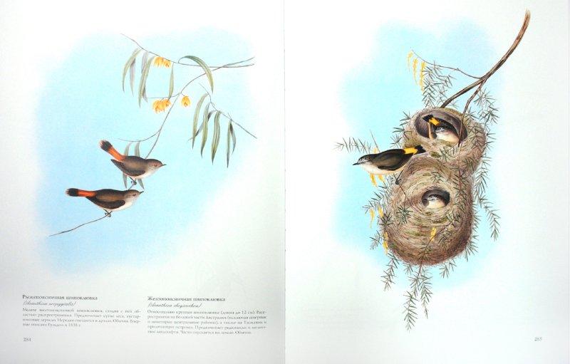 Иллюстрация 1 из 52 для Птицы Австралии (в футляре) - Джон Гульд | Лабиринт - книги. Источник: Лабиринт